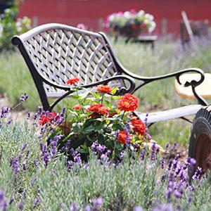 5th Annual Lavender Festival U0026 Art In The Garden